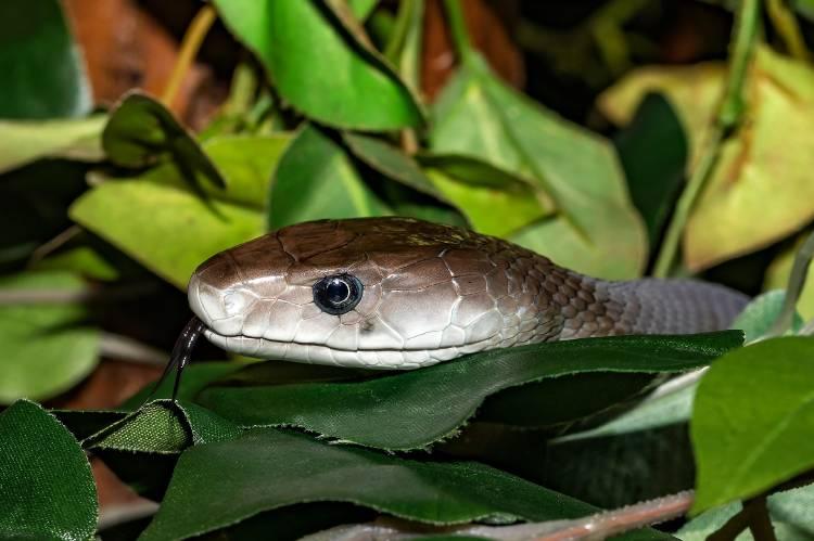 snake-4180798_1920