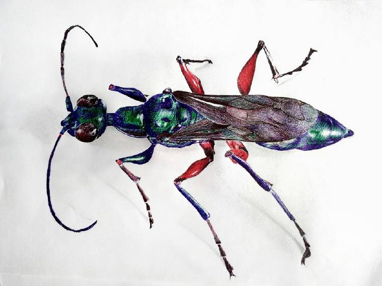 emerald-cockroach-wasp-3688733_960_720