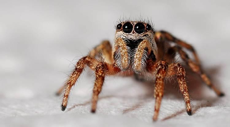 spider-564685_960_720