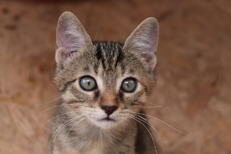 gatoooo